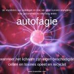 voordelen van autofagie